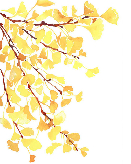 Watercoloryellowgingko